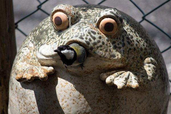 frogbird (6)