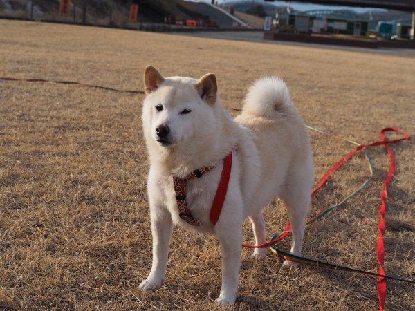 jishindog (4)