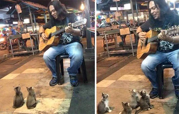 streetmusic_cat