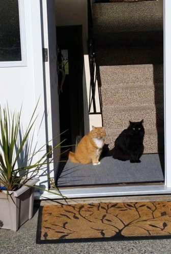surprisingcat (1)