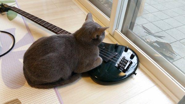 surprisingcat (6)
