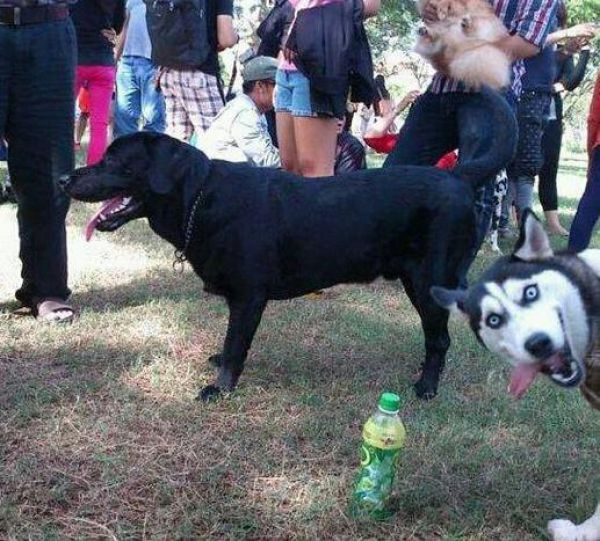 animals_selfies3