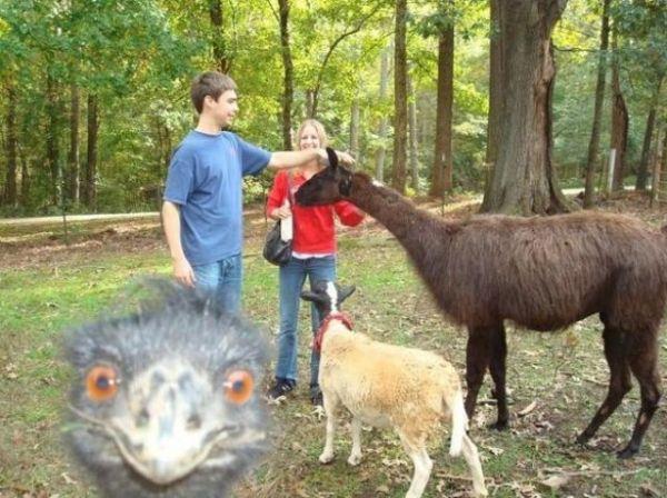 animals_selfies8