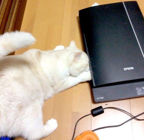 neko_ scanner(2)