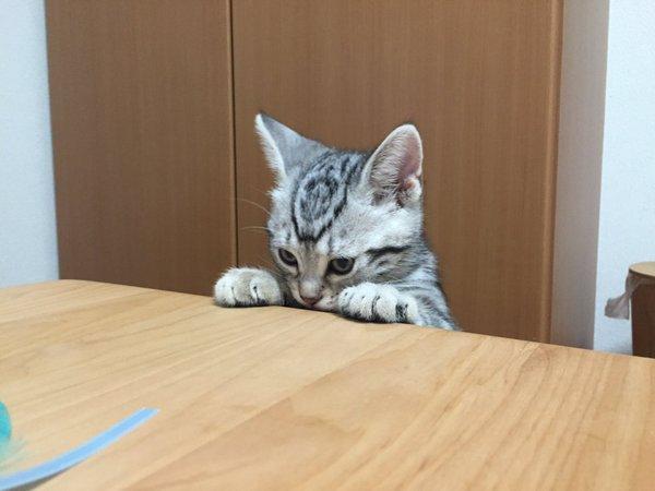 skynnycat_zetsubo7