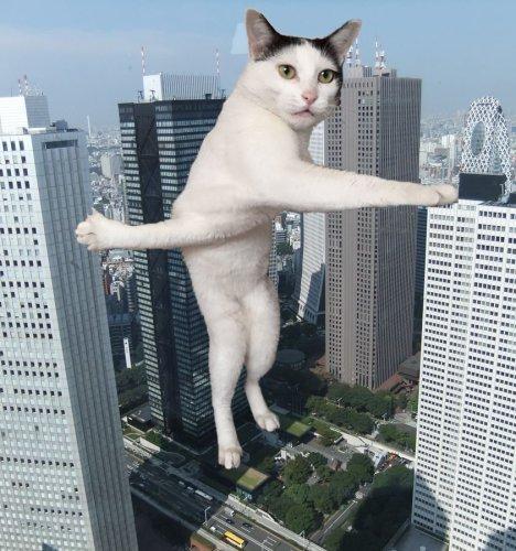 cat_nail (6)