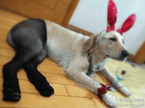 dog_taitsu (2)