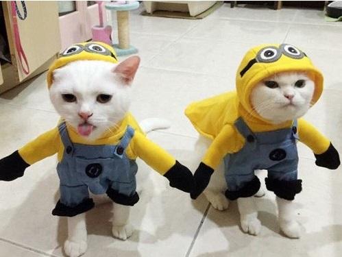 cat_costume-13
