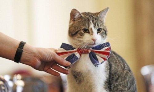 cat_costume-2