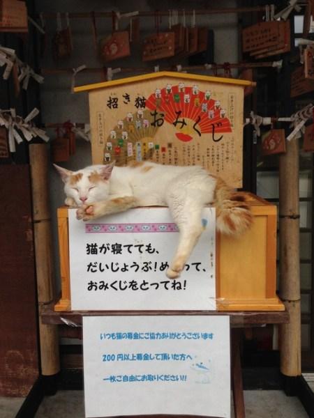 manekineko_omikuji6