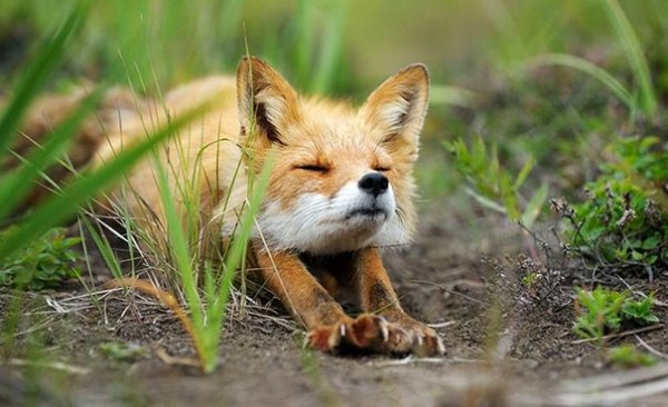 yoga_animal (3)