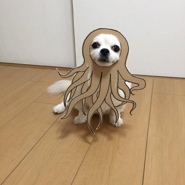 danborudog-10