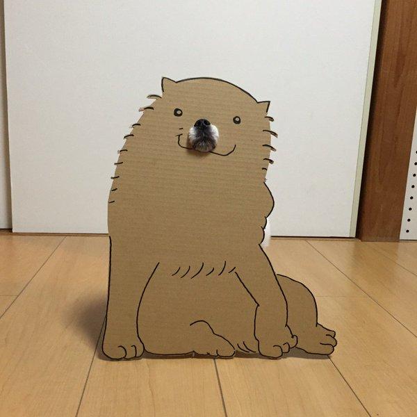 danborudog-11