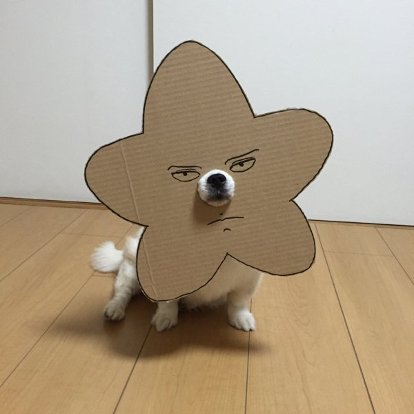 danborudog-7