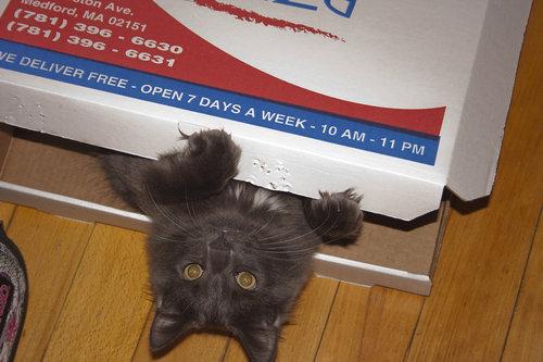 pizzacat-11