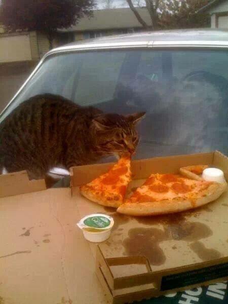 pizzacat-12