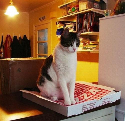 pizzacat-16