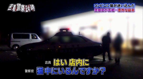 police-cat-11