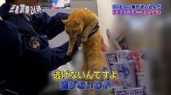 police-cat-6