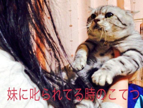 cat-aikyo (6)