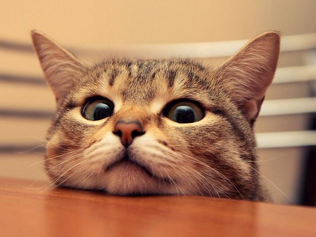 猫 ゴロゴロ うるさい