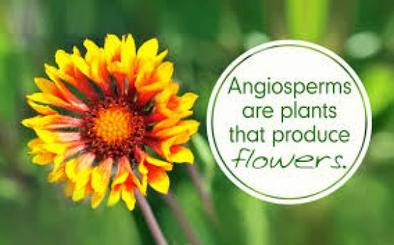 angiosperms hindi, green dinosaur hindi, botanists call angiosperms green dinosaur hindi, fulon wale poudhe hindi,
