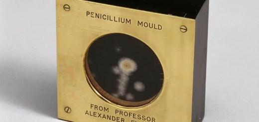 penicillin ki khoj kese hui