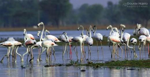 Ranthambhor in hindi, birds in ranthambhor in hindi, birds of ranthambhro in hindi, ranthambhor birds hindi, hindi essay on ranthambhor, Ranthambhor animals hindi, ranthambhor repltiles hindi, Ranthambhor kya he, Ranthambhor kaha he