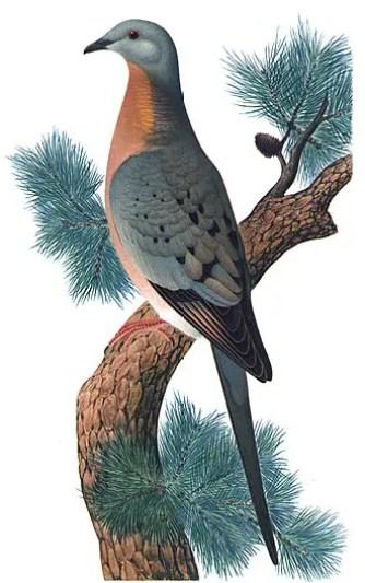 Extinct birds in hindi, essay on extinct birds hindi, why birds extinct hindi, vilupt pakshiyon ke naam, kon se pakshi vilupt,