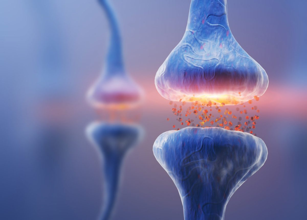 human-brain-chip-synapses-1440x1030-1.jpg?fit=1200%2C859&ssl=1