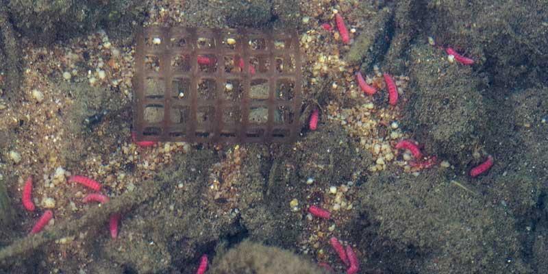 drennan gripmesh choisir son feeder en étang pour une amorce active