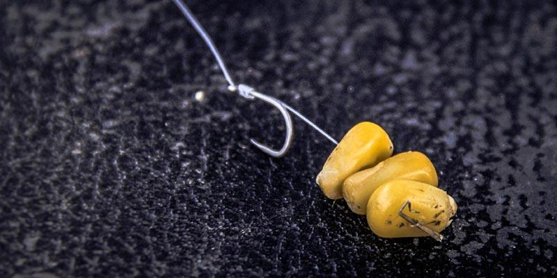 pêche carpe au coup au maïs avec montage au cheveu