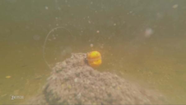 pêche barbeau method feeder riviere sauvage action amorce pellet underwater