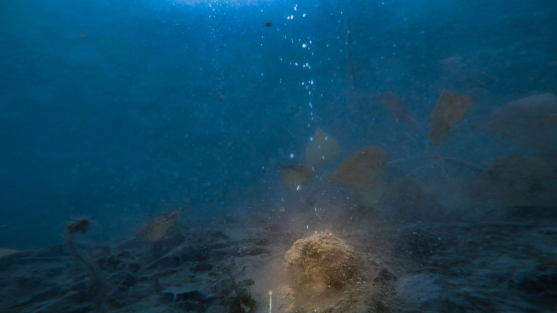 recette amorce gros gardon - fond netpeche video vue sous-marine underwater