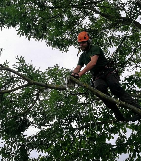 Tree Surgeon up tree cutting of branch