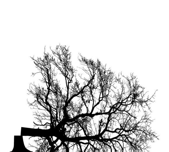 silhouette of a tree which has been taken down and felled