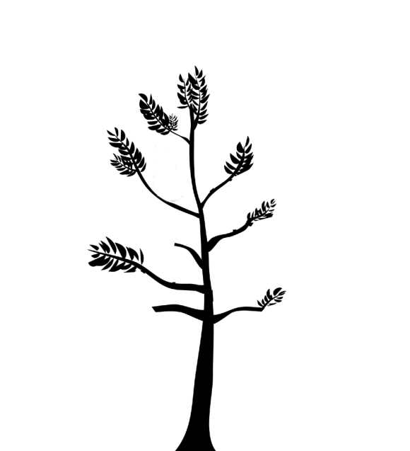 silhouette of a tree which has undergone formative pruning