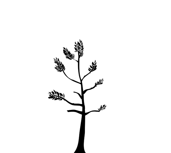 silhouette of a tree which has had formative pruning