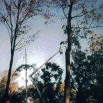 Tree Removal Glastonbury CT