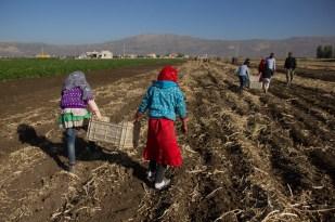 refugeelaborers