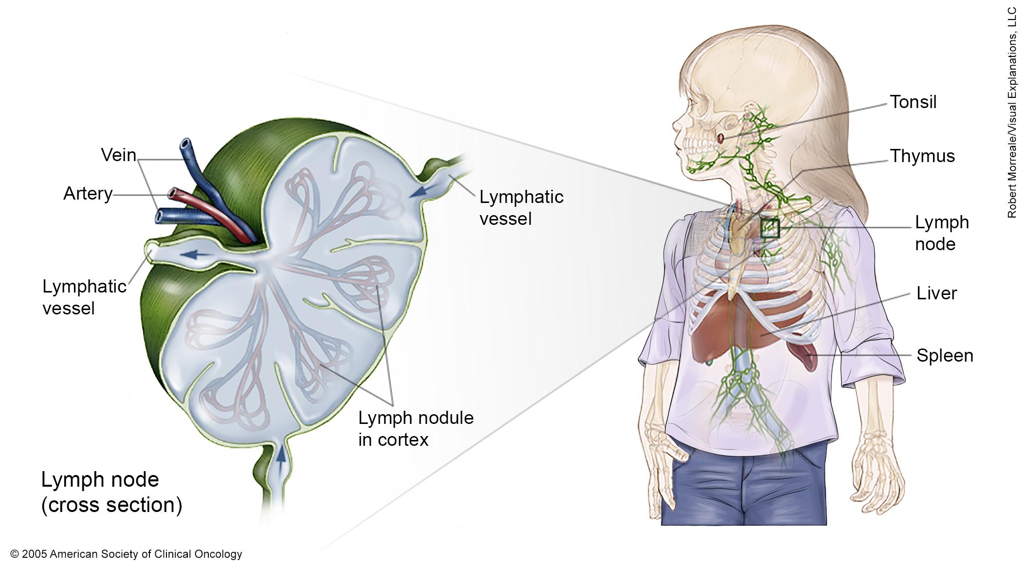 Latest News On Lymphoma Research Jan Netzen