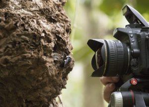 Fotograf Clay Bolt fotografiert die größte Biene der Welt