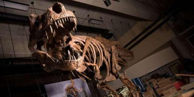Dynamische Abbildung des Skelettes von Scotty