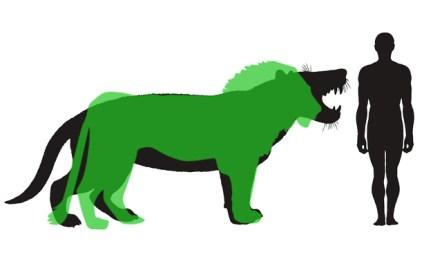 Vergleich des Körperbaus von Simbakubwa und Panthera leo