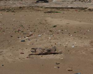 Unbekannter Kadaver am Strand