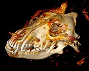 CT-Scan des Kopfes
