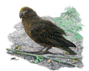 Künstlerische Darstellung des neu beschriebenen Riesenpapgeis