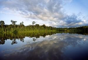 Dschungel von Guayana
