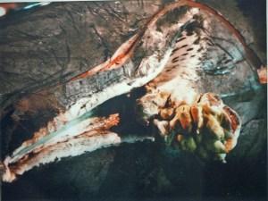 Pottwal mit verkrüppeltem Unterkiefer