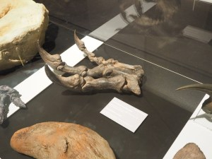 Hand eines Allosaurus